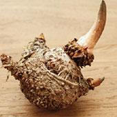 קונג'אק (גלוקומנן), כלי חדש למאבק בהשמנה
